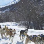 Randonnée en chiens de traineau sous la neige