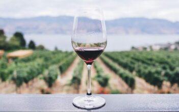 dégustation vin AOC avec Mobilboard