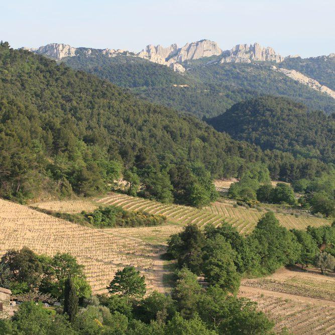 Visiter la Vallée Du Rhône : les vignobles AOC de Condrieu