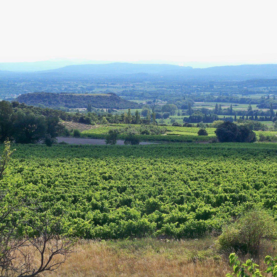 Découverte des vignobles de Vienne