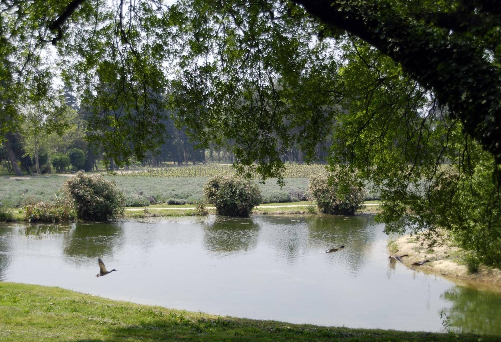 Le parc du Domaine de l'Estoublon
